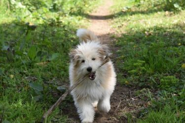 A healthy dog biting a stick while running in the woods.